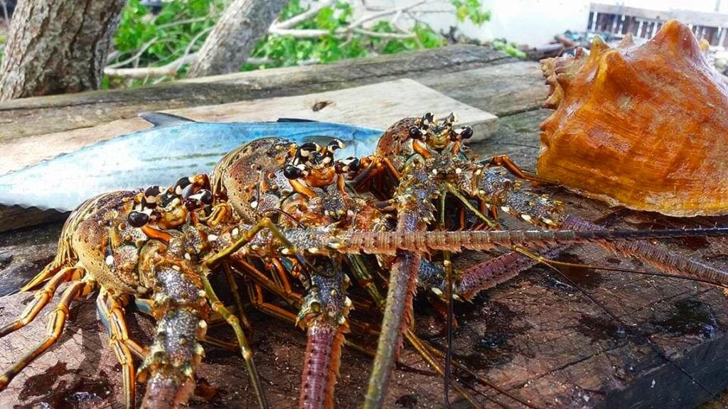 Belize lobster fest